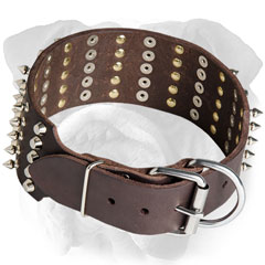 Luxury English Bulldog collar with tough hardware