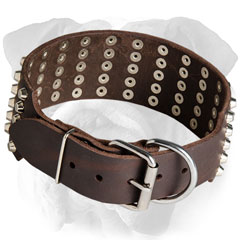 Chic English Bulldog collar with tough fittings