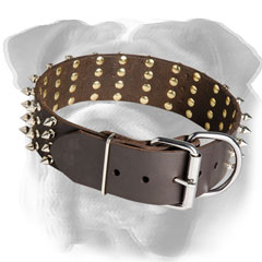 English Bulldog collar with reliable hardware