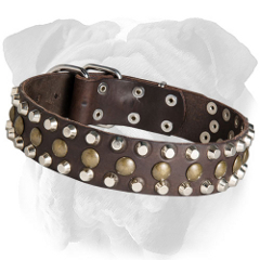 Stylish English Bulldog collar with studs and pyramids