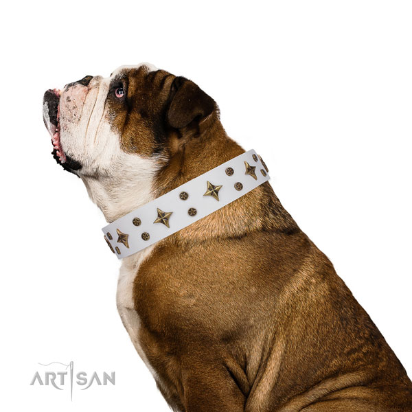 English Bulldog amazing full grain natural leather dog collar for everyday use