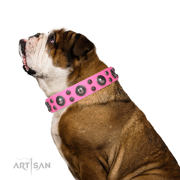 English Bulldog stunning leather dog collar for stylish walking