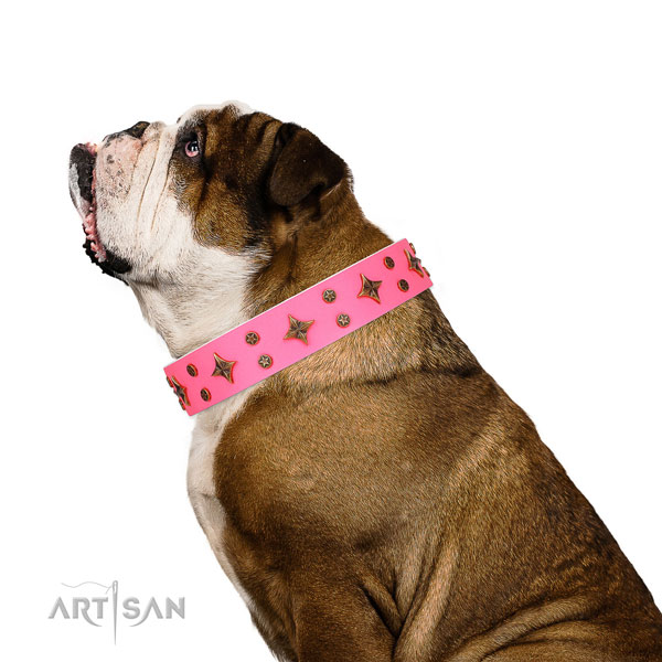 English Bulldog incredible genuine leather dog collar for comfy wearing