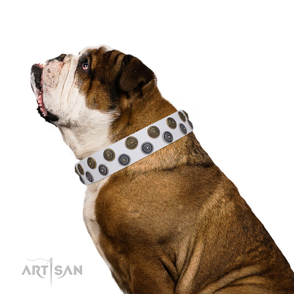 English Bulldog trendy full grain genuine leather dog collar for comfy wearing