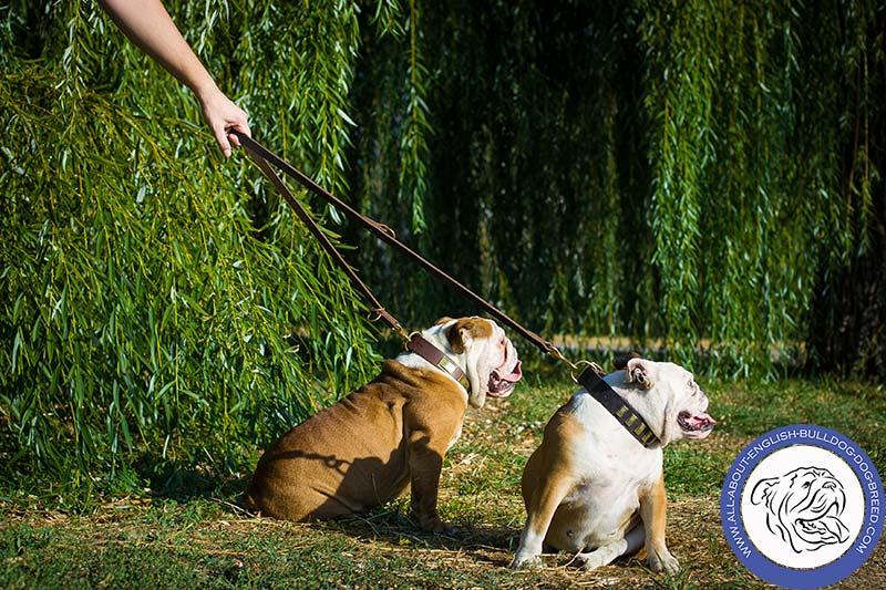 Designer Leather English Bulldog Collar [C88##1093 Leather Collar ...