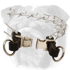 Pinch collar with quick release buckle for English  Bulldog