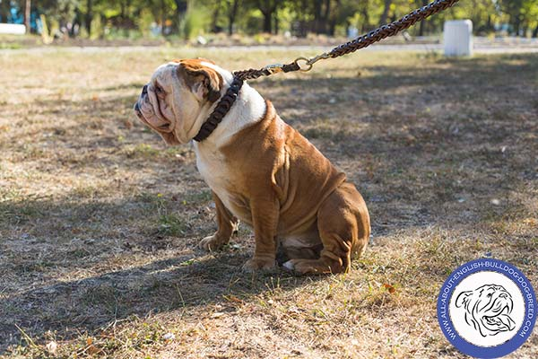 Leather English Bulldog Collar Fully Braided
