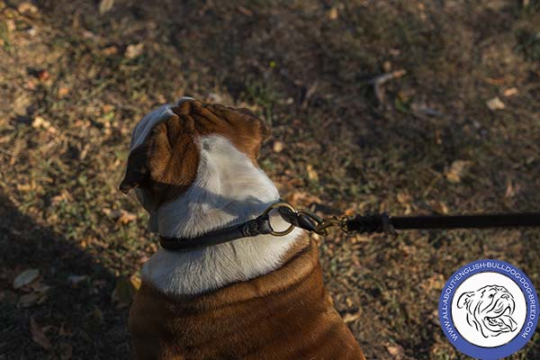 Leather English Bulldog Collar for Daily Walking