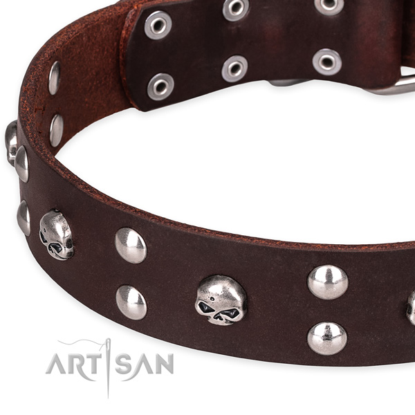 Daily leather dog collar with sensational adornments