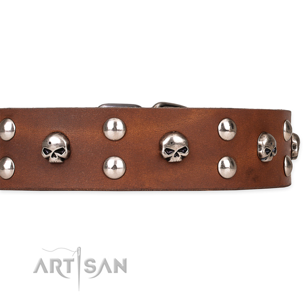 Full grain genuine leather dog collar with thoroughly polished leather surface