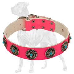 Riveted Pink Leather English Bulldog Collar
