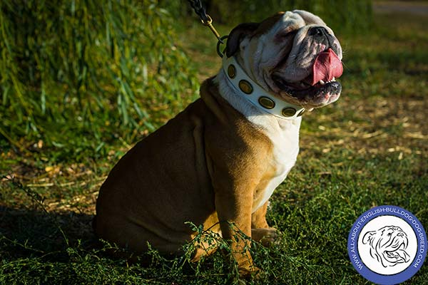 White Leather English Bulldog Collar with Dainty Design
