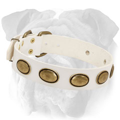 Plated White Leather English Bulldog Collar