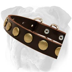 English Bulldog Collar With Round Brass Studs