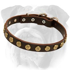 English Bulldog Leather Collar With Brass Circle Studs