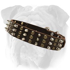 English Bulldog Leather Collar With Spiked And Studs