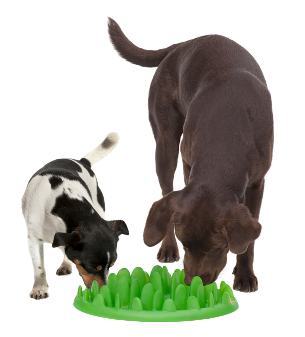 Easy in Use Dog Feeder