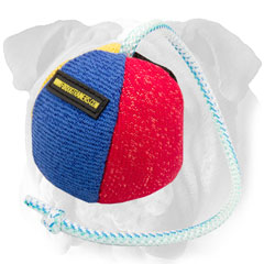 Soft Training Toy for English Bulldog
