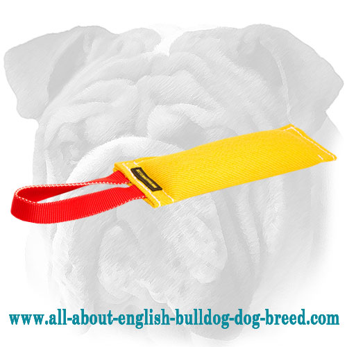 French linen English Bulldog tug for bite skills  development