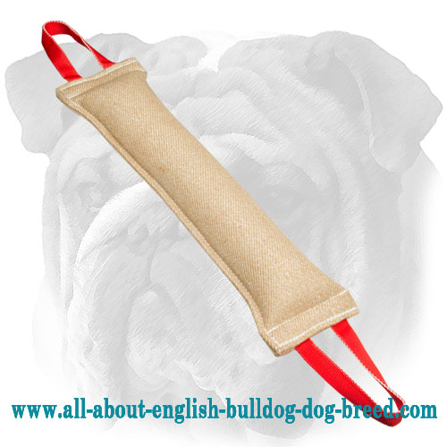 Solid English Bulldog bite tug with two handles