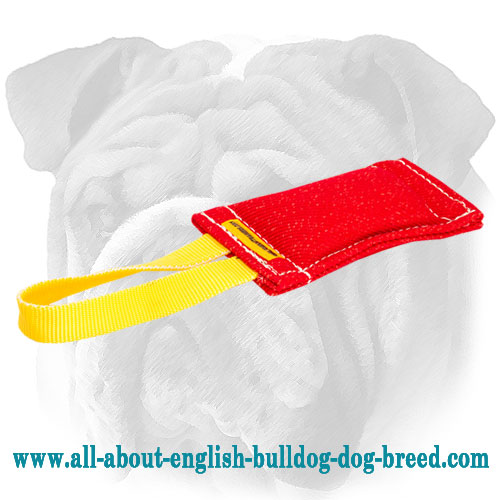 English Bulldog bite tug stitched for extra durability
