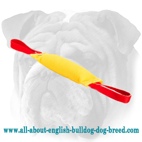 English Bulldog bite tug with two handles