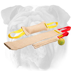 Happy puppy English Bulldog set of bite tugs