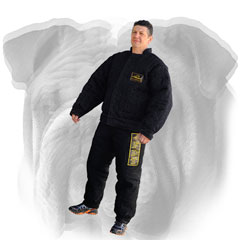 Protection suit for English Bulldog training