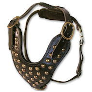 studded dog harness for English Bulldogs,British bulldogs,Old english Bulldogs