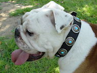 Bulldog Dog Collar with Silver Plated Circles Blue Stones