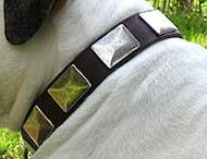 English Bulldog Leather Collar With Vintage Massive Plates