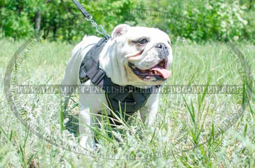 Adjustable Nylon English Bulldog Harness
