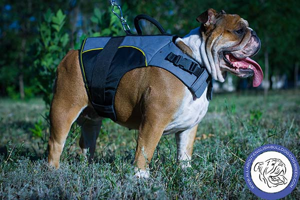 Adjustable in Size Dog Harness with Quick Release Buckle