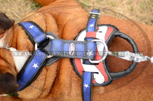 Leather English Bulldog Harness with strong D-ring