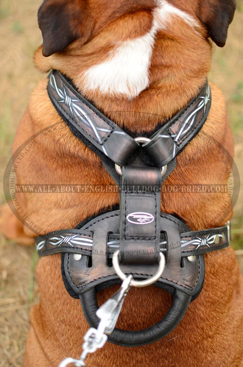 Choose Now Fashion Handmade Leather Dog Harness For Bulldog