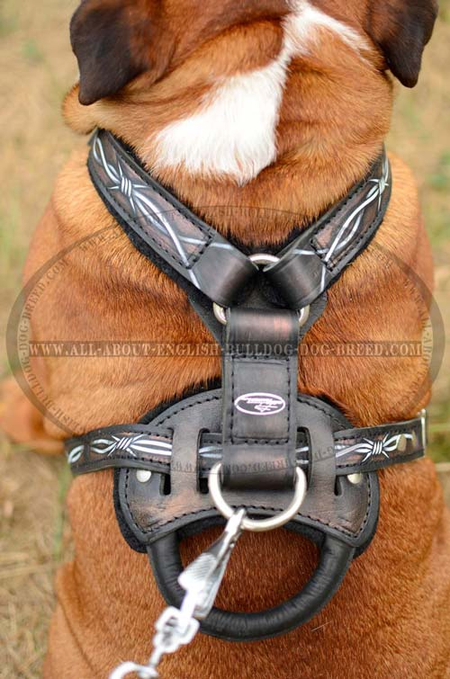 English Bulldog Harness with strong D-ring