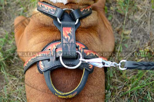 Bulldog Harness with reliable D-ring