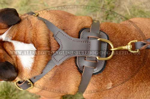 Handcrafted English Bulldog Harness