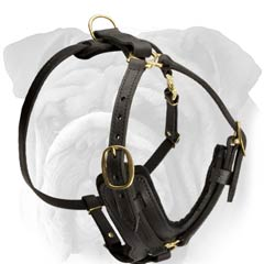 Designer Leather Dog Harness for English Bulldog Breed