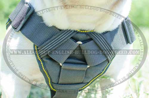 Padded Nylon English Bulldog Harness