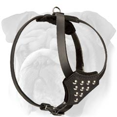 Leather English Bulldog Puppy Harness with Cones