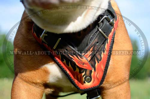Bulldog Harness with wide chest plate