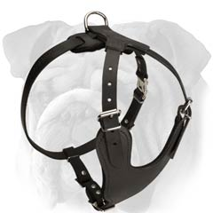 Strong Leather English Bulldog Harness
