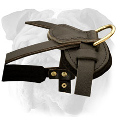 Leather English Bulldog Harness with Strong D-ring for Leash Attachment