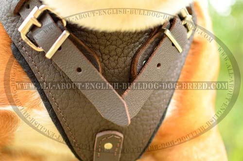 Perfect Leather English Bulldog Harness for Attack and Protection  Work