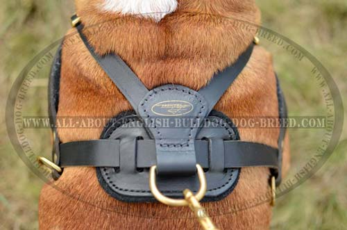 English Bulldog Harness with Reliable Hardware