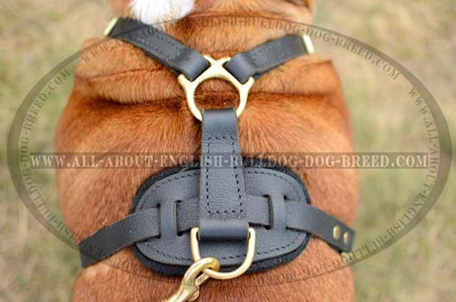 Hypoallergenic Leather Harness for English Bulldog