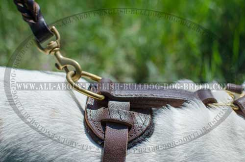 Non-Toxic Leather Harness for English Bulldog