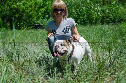 Leather English Bulldog Harness Made of Safe Material