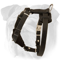 Adjustable Leather English Bulldog Puppy Harness